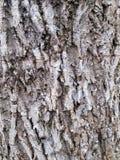 Alte Baumholzbeschaffenheit Lizenzfreie Stockfotos