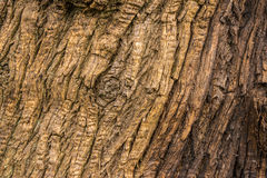 Alte Baumholzbeschaffenheit Lizenzfreies Stockfoto