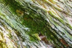 Alte Baumholzbeschaffenheit Stockbild