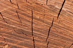 Alte Baumnahaufnahme der Beschaffenheit Stockfotografie