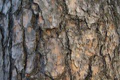 Alte Baumnahaufnahme der Rinde Lizenzfreies Stockbild