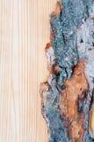 Alte Baumrinde auf hellem Hintergrund Lizenzfreies Stockbild