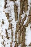 Alte Baumrinde-Beschaffenheit Stockfoto