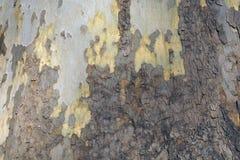 Alte Baumrinde-Beschaffenheit Stockbild