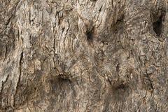 Alte Baumrinde-Beschaffenheit Der Hintergrund der alten Baumrinde Stockfotografie