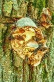 Alte Baumrinde der Nahaufnahme mit Pilz Lizenzfreie Stockfotografie