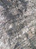 Alte Baumrinde für natürlichen strukturierten Hintergrund Stockbilder