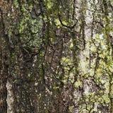 Alte Baumrinde für natürlichen strukturierten Hintergrund Stockfotos