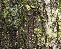 Alte Baumrinde für natürlichen strukturierten Hintergrund Stockfotografie
