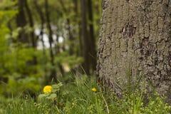 Alte Baumrinde mit grünem Moos und Gras Lizenzfreie Stockfotografie