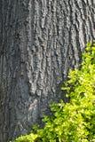 Alte Baumrinde mit Grünpflanze Lizenzfreies Stockbild