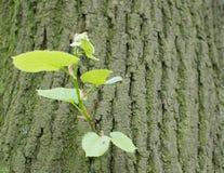 Alte Baumrinde mit Grünpflanze Lizenzfreie Stockfotos