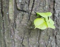 Alte Baumrinde mit Grünpflanze Lizenzfreies Stockfoto