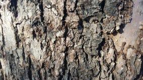 Alte Baumrinde mit großen Sprüngen Lizenzfreie Stockfotografie