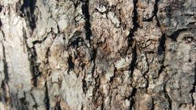 Alte Baumrinde mit großen Sprüngen Stockfoto