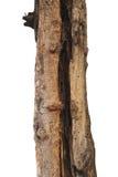 Alte Baumrinde mit Loch auf weißem Hintergrund Stockbild
