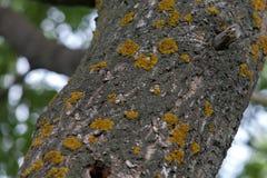 Alte Baumrinde mit Moos- und Flechtenbeschaffenheit Stockbilder