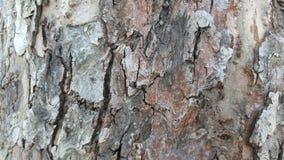 Alte Baumrinde mit Sprüngen Lizenzfreies Stockbild