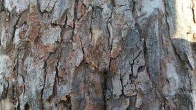 Alte Baumrinde mit Sprüngen Stockbilder