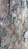 Alte Baumrinde mit Sprüngen Stockfotos