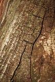 Alte Baumrinde mit Sprüngen Stockfotografie
