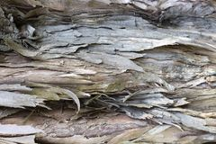 Alte Baumrinde mit Sprüngen Nahaufnahme, Beschaffenheit, Hintergrund stockfotos
