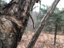 Alte Baumrinde, Nahaufnahme Herbstlicher Wald Lizenzfreies Stockfoto