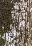 Alte Baumrindebeschaffenheit Lizenzfreies Stockbild