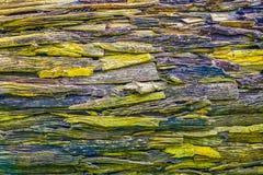 Alte Baumrindebeschaffenheit, -GELB und -BRAUN Stockfotografie