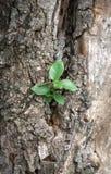 Alte Baumrindebeschaffenheit mit Grünpflanzen Lizenzfreie Stockbilder