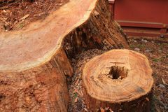 Alte Baumrindebeschaffenheit, patture Stockbilder