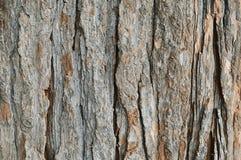 Alte Baumrindehintergrundbeschaffenheit Lizenzfreie Stockbilder