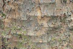 Alte Baumrindehintergrundbeschaffenheit Lizenzfreies Stockfoto
