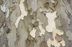 Alte Baumrindehintergrundbeschaffenheit Stockbild