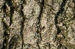 Alte Baumrindenahaufnahme Stockfoto