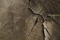 Alte Baumringbeschaffenheit Stockbilder