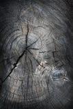 Alte Baumschnittbeschaffenheit Stockfoto