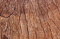 Alte Baumschnittbeschaffenheit Lizenzfreies Stockfoto
