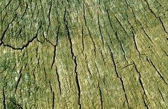 Alte Baumschnittbeschaffenheit Stockbilder