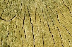 Alte Baumschnittbeschaffenheit Stockfotografie