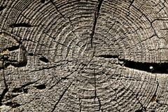 Alte Baumschnittbeschaffenheit Stockfotos
