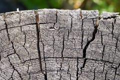 Alte Baumschnittbeschaffenheit Lizenzfreie Stockbilder