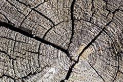 Alte Baumschnittbeschaffenheit Stockbild