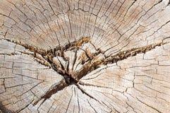 Alte Baumschnittstruktur Stockbild