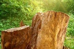 Alte Baumstümpfe im natürlichen Hintergrund Lizenzfreie Stockfotos