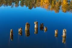 Alte Baumstümpfe im Wasser Stockbilder