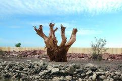 Alte Baumstümpfe in natürlichem Stockfoto