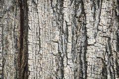 Alte Baumstamm-Detailbeschaffenheit als natürlicher Hintergrund Lizenzfreies Stockbild