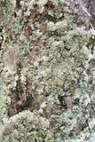 Alte Baumstammbeschaffenheit Stockbild