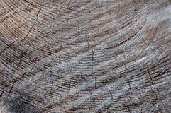 Alte Baumstumpfbeschaffenheit Lizenzfreies Stockbild